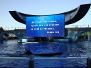 Sea World Orlando_1